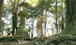 奈良的鹿颠覆你想象