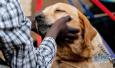 济南养犬新规敲定!绕城高速内居民被罚3次5年禁养犬