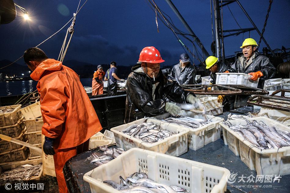 日照:渔民收获开渔第一网