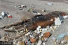 海滩现巨型生物遗骸