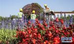 今年国庆去看啥?天安门广场国庆花卉开始布置