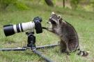 动物界的摄影大师