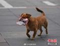 现实版忠犬八公