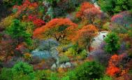 观赏红叶正当时 栾川多处红叶达最佳观赏期