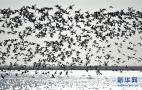 天津湿地迎大批候鸟