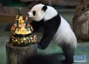 """台北动物园的大熊猫""""圆仔""""4岁生日"""