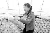 三门峡湖滨区:小香菇闯出脱贫致富路