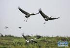 东营森林公安救助两只国家重点保护鸟类