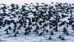 密恐慎点! 印度达尔胡湖面候鸟成群栖息