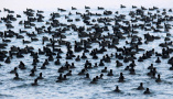印度达尔胡湖面候鸟成群栖息密恐慎点!