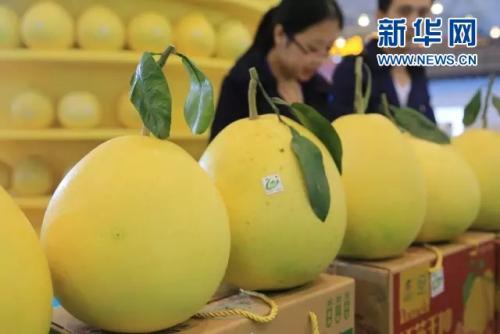 线上赌博平台网址:冬吃柚子好处多 这些你知道吗