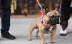 近期少招惹猫猫狗狗!宁波鄞州二医一天有50人打狂犬疫苗