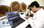 山东省将对古树名木分三级认定保护
