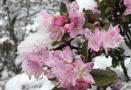 玉龙雪山降下大雪