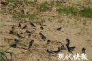 """夏候鸟""""先头部队""""抵达南京,你看到它们了吗"""