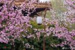 四月的南京,这样才不负春光!