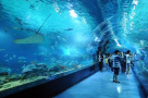 """五一小长假看海洋动物 青岛两大景区放""""大招"""""""
