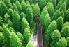 江苏黄海国家森林公园生态美景入画来