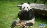 """大熊猫""""瑛美""""告别扬州回家乡"""
