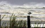 大西洋飓风季再临可能出现4次大型飓风