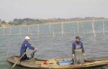 太湖围网清拆调查:螃蟹养到太湖里,没想到代价这么大!