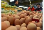 8月份蛋价涨势凶猛 原来是这两个原因......