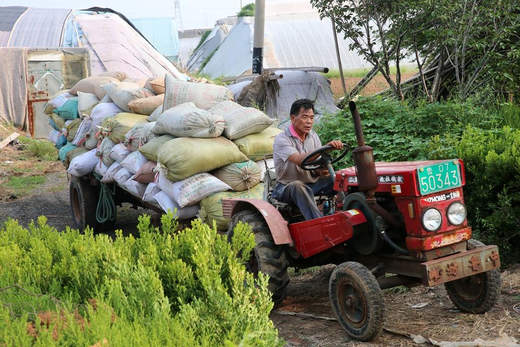 寿光部分受灾菜农逐步恢复生产