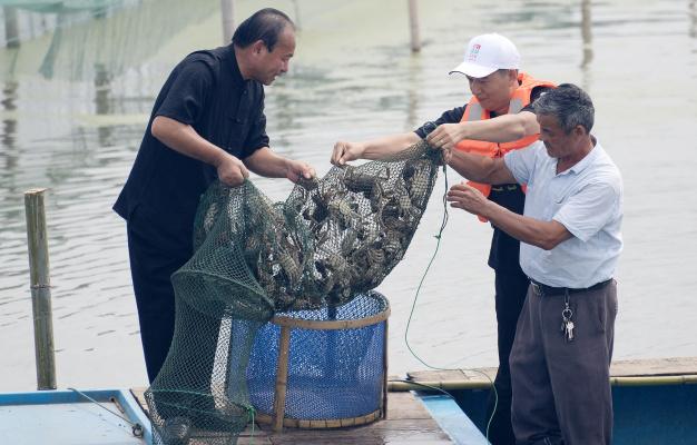 阳澄湖大闸蟹昨开捕:个头较往年略大,价格或将有所上涨