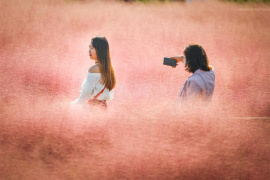 """郑州北龙湖现""""粉色海洋""""市民为拍照闯警戒线"""