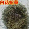 第一书记巧搭桥 汝南县2万亩白花蛇草销往国外