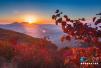 同看功夫、登嵩山、游少林 赏中原醉美红叶
