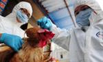 日本研究发现:H7N9病毒或可飞沫传播