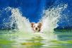 杭州整治不文明养犬行为,罚款最高可达1万元
