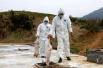 全国非洲猪瘟疫情总体可控 不影响食品安全