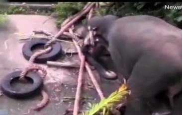 """斯里兰卡:众人搭""""梯子""""救大象上岸"""