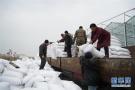 河北巨鹿:葡萄园里冬管忙