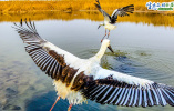 【生态文明@湿地】天津湿地 鸟类天堂