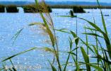 【生态文明@湿地】纪录片:我和湿地有个约会