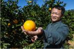 褚氏农业携手拼多多打造数字农业 云冠橙接力褚橙亮相年货节