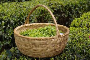湖北茶产业疫情期间损失超8亿元 鹤峰茶商为销路发愁