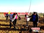 """河南汝州:产业扶贫有妙招 """"长短结合""""见成效"""
