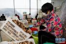 河南宝丰:食用菌大棚复工忙