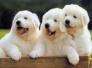宠物易引起小儿皮肤过敏 防过敏做好这3件事
