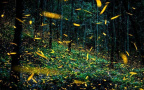 奇幻美景!墨西哥现真实版萤火虫森林