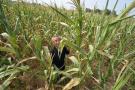 辽宁重旱面积超过121万亩 1.47万人饮水困难