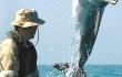 英媒:俄海军首次用白鲸在北极执行军事任务