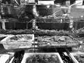 螃蟹横行上市:76元螃蟹绳子占38元 摊开近10m2