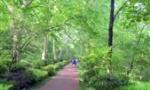 """城市""""颜值""""在刷新!紫金山绿道能看遍最美风景"""