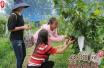 河南省内黄县发展乡村旅游带动群众脱贫致富