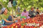 植绿地富乡亲 邱庄村发展林果经济谋求高品质发展